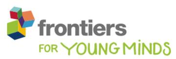 frontiers in young minds