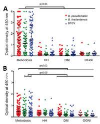 Human humoral immune responses to burkholderia pseudomallei